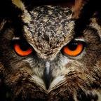 Eule-Vogel-Augen