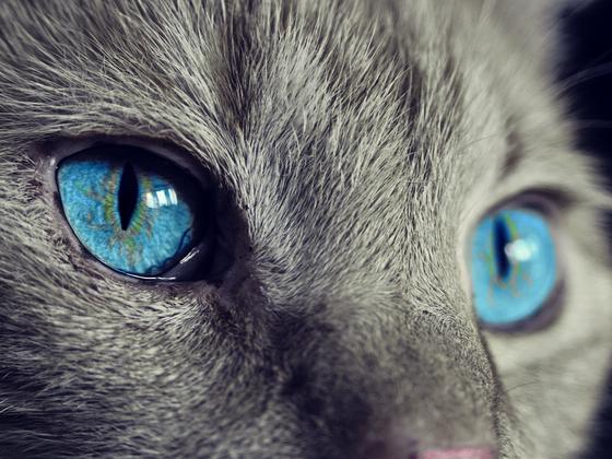 Katze - Augen
