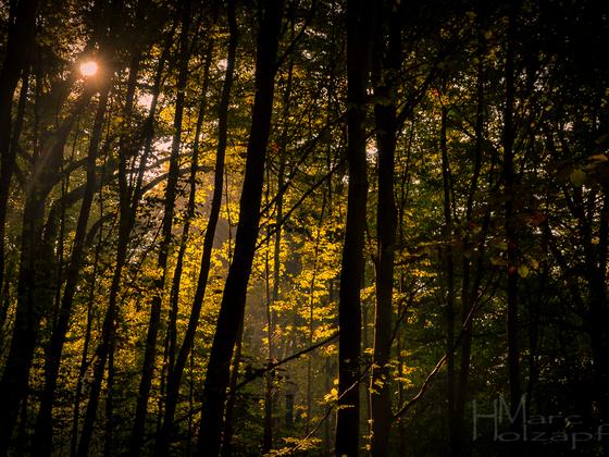 Herbstliches Wetter im Wald