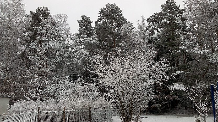 Winter-Schnee-2016