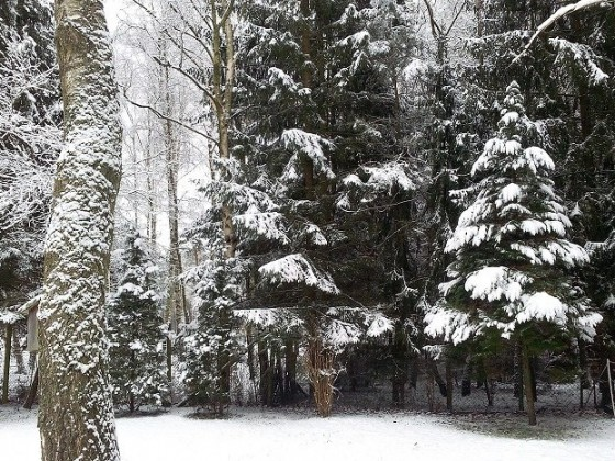 Schnee-Winter-2016